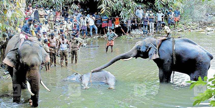 Pregnent Mother Elephant died